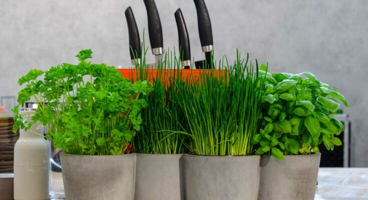 Healing with Herbs - Seniors Today