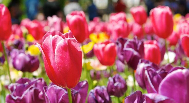 Canberra's Floriade festival - Seniors Today