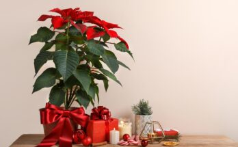 5 Easy Ways for A Festive Look at Home - Seniors Today