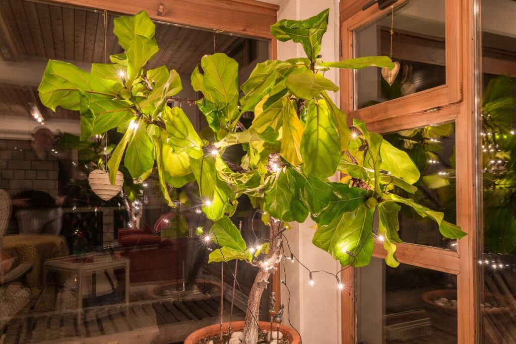 Lights on Plants Are Such A Delight - Seniors Today 2