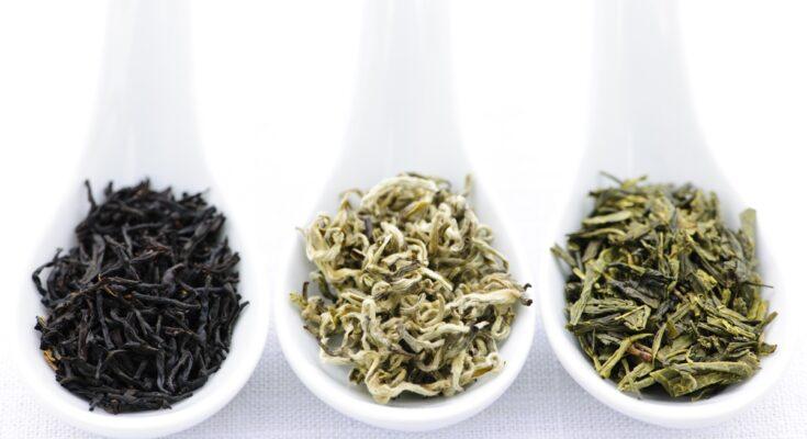 Tea or Tisane anyone - Cover image Seniors Today