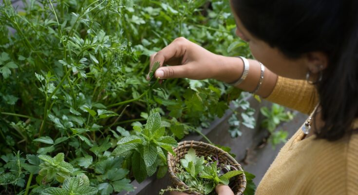 5 Useful Herbs You Can Grow and Use at Home - Seniors Today
