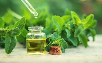 The Uses and Benefits of Herb Oils – Peppermint