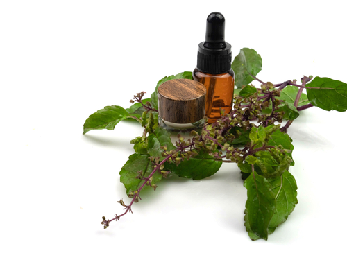 Essential,Oil,Of,Basil,In,Bottle,And,Red,Basil,Leaves,