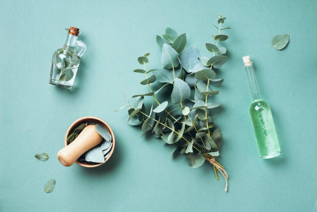 Eucalyptus: Blessing or Curse?