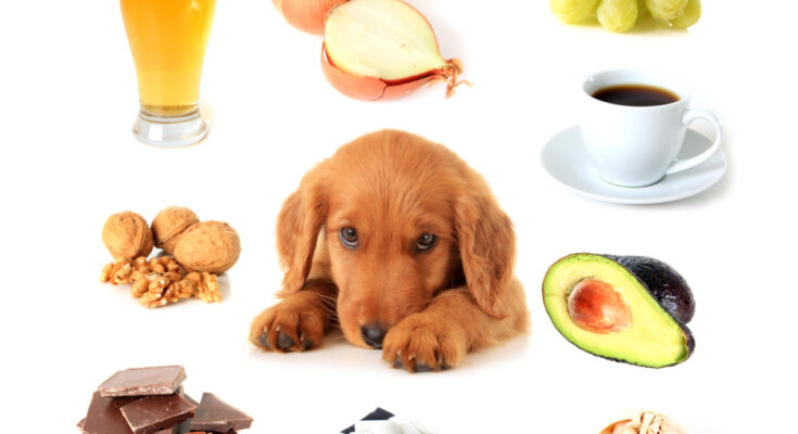 Dog lovers dont feed your dog these foods