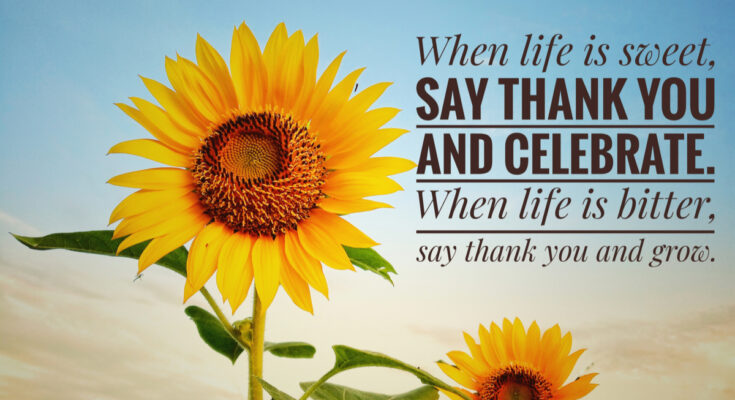 Your Daily Cup Of Gratitude