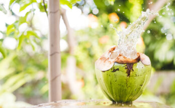 Why a coconut water a day holds immense health benefits