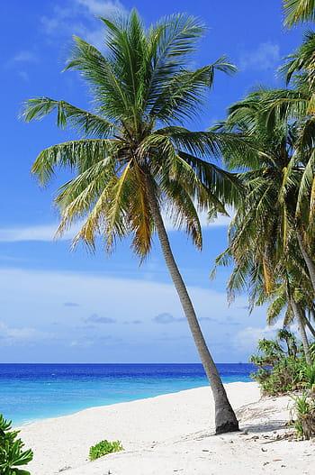 atoll-beach-couple-destination-royalty-free-thumbnail